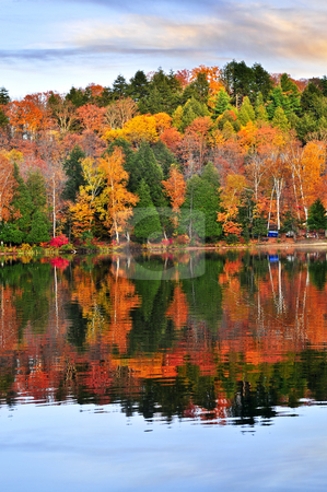 Fall forest reflections stock photo, Forest of colorful autumn trees reflecting in calm lake by Elena Elisseeva