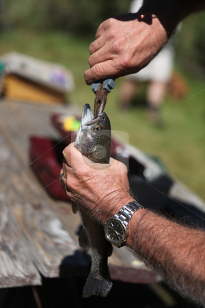 Removing a Fish Hook From a Trout Mouth stock photo, Man Removing a Fish Hook From a Trout Mouth by Katrina Brown