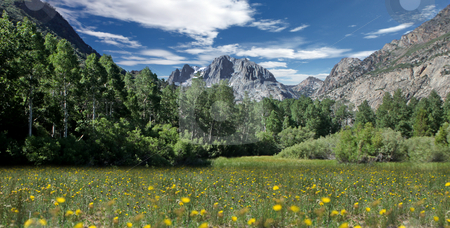 Field of Flowers in the Eastern Sierras stock photo, Beautiful Field of Flowers in the Eastern Sierras by Katrina Brown