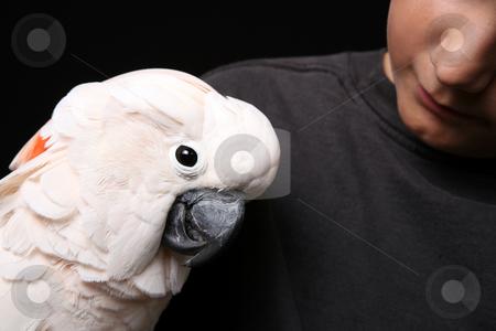 Moluccan Cockatoo With His Human Companion stock photo, Moluccan Cockatoo With His Handler by Katrina Brown