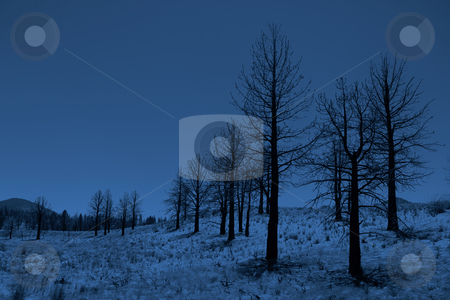 Moonlit Trees in the Sierra Mountains stock photo, Stunning Moonlit Trees in the Sierra Mountains by Katrina Brown