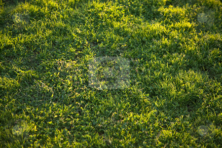 Beautiful Green Grass Background Texture  stock photo, Beautiful Green Grass Background Texture in the Afternoon Sun. by Andy Dean