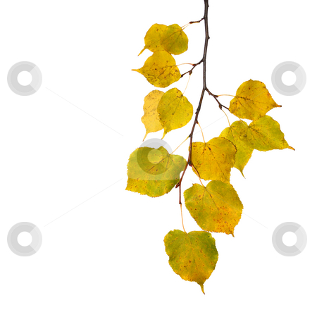 Beautiful golden leaves in autumn stock photo, Beautiful golden leaves in autumn by Julian Weber