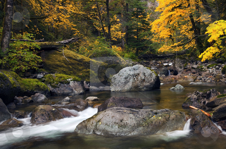 Autumn Falls stock photo, A series of small waterfalls and cascades on a small creek flow past golden maples trees. by Mike Dawson