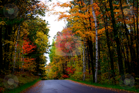 Fall Magic II stock photo, Fall colors can be so dramatic it is hard to believe the are real as shown by the colorful display on this quiet road in north central Minnesota on a cloudy day. by Dennis Thomsen