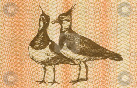 Pair of Eurasian Lapwings stock photo, Pair of eurasian lapwings on 1 talonas banknote from Lithuania by Georgios Kollidas