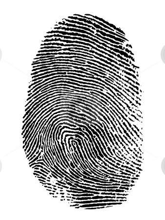 Fingerprint stock photo, Thumb print on white background by James Steidl