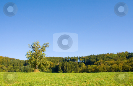 Idyllic meadow with tree stock photo, Idyllic meadow with tree by Julian Weber