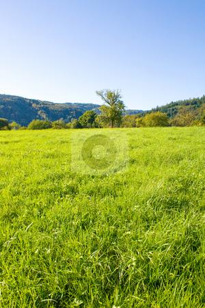 Idyllic meadow with tree stock photo, Idyllic meadow with tree by Julian Weber