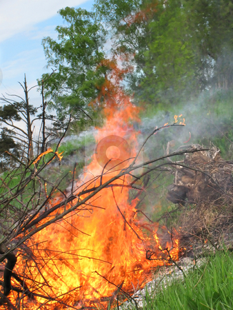 Forest Fire stock photo, Close-up of the flame. Forest fire by Olga Lipatova