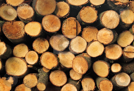 Cut firewood logs stack. stock photo, Cut firewood logs stack. by Stephen Rees