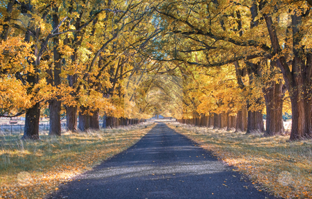 Autumn country road stock photo, Great image of an tree lined road in autumn by Phil Morley