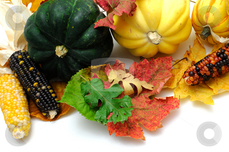 Fall Colors stock photo, Yellow and green acorn squash with Colorful Indian Corn and Autumn leaves isolated on white by Lynn Bendickson