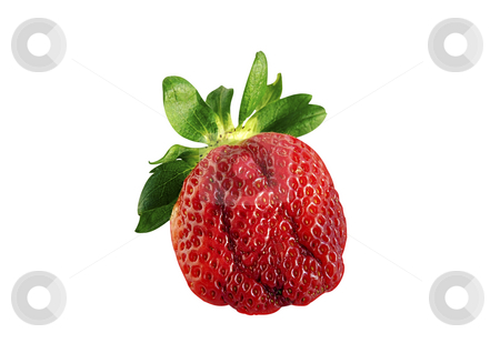 Strawberry. stock photo, Strawberry isolated over white with clipping path. by Liana Bukhtyyarova