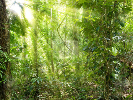 Sunshine in rain forest stock photo, Great image of light rays in the rain forest by Phil Morley