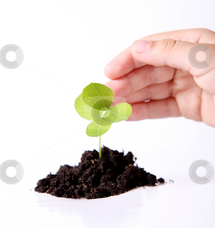 Protection stock photo, Nature. A plant sown over white background by Giuseppe Ramos