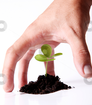 Nature stock photo, Hand protecting a green plant. Nature image by Giuseppe Ramos