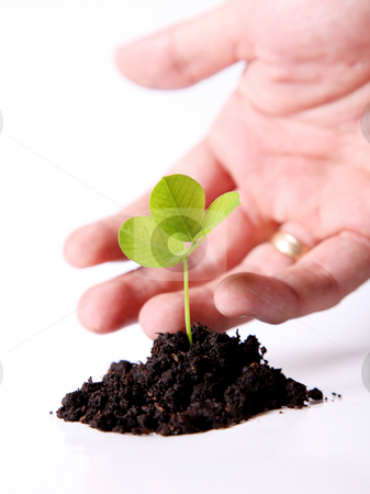 Green stock photo, Nature. A plant sown over white background by Giuseppe Ramos
