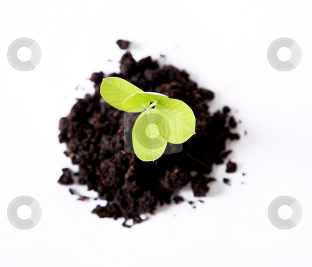 Plant stock photo, Nature. A plant sown over white background by Giuseppe Ramos