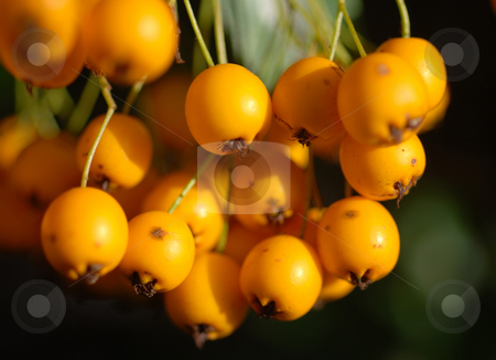 Summer fruits stock photo, Berries by Chris Davidson