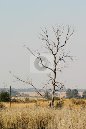 Dead tree stock photo, Dead tree in nature reserve by Sean Nel