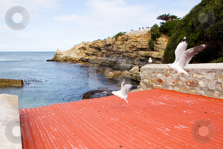 Bird #6 stock photo, Seagull sitting on wooden post - copy space by Sean Nel