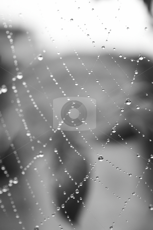 Spiders web stock photo, Water drops on a spiders web after early morning rain, Shallow Depth of Field by Sean Nel