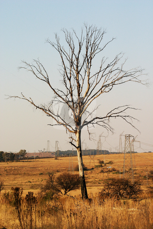 Dead tree stock photo, Dead tree and electricity pylons in a nature reserve by Sean Nel