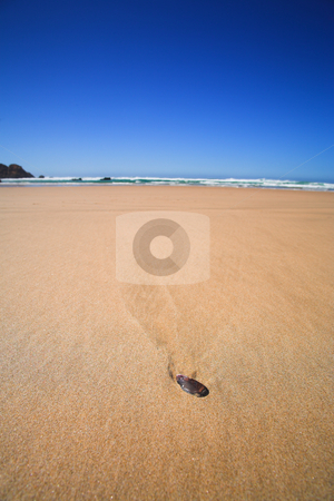 Shell on the beach stock photo, Single shell lying on a long beach on a summers day with a blue sky by Sean Nel