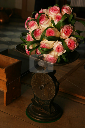 Heavy Roses stock photo, Pink roses on a scale by Sean Nel