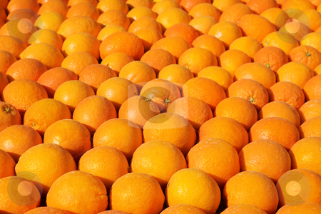 Menton #4 stock photo, Background of oranges.  Shallow D.O.F by Sean Nel