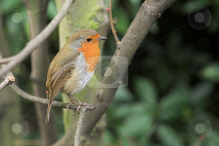 London #1 stock photo, Bird sitting on a tree.  Shallow depth of field.  Copy space. by Sean Nel