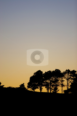 Silhouette #4 stock photo, Silhouette of trees at sunset by Sean Nel