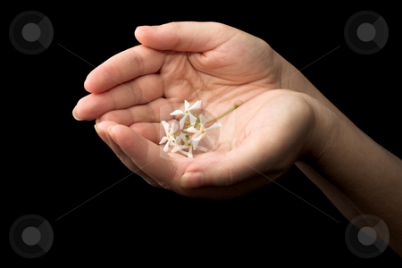 Hands #15 stock photo, Hand holding a white flowers by Sean Nel