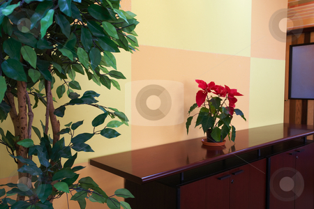 Small plant in office lobby stock photo, Small plant against an orange block pattern in an office lobby on a brown cabinet top with a evergreen tree on the side by Sean Nel