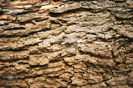 Brown Tree Bark stock photo, Rough textured tree bark by Sean Nel