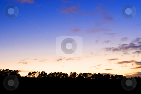 Silhouette #6 stock photo, Silhouette of trees at sunset by Sean Nel