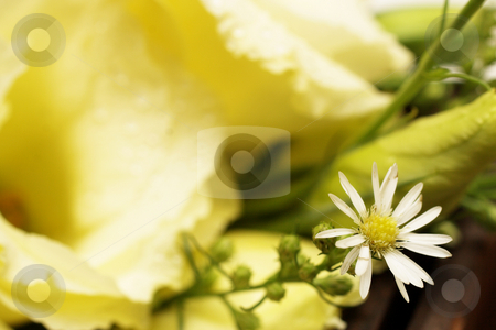 Wedding #17 stock photo, Close-up of a bouquet with roses and daisies - daisy in focuss, rose out of focus, shallow DOF - copy space by Sean Nel
