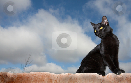 Cats #02 stock photo, Black cat on a wall by Sean Nel
