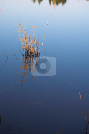 Flyfish #49 stock photo, Landscape of a fly-fishing dam. by Sean Nel