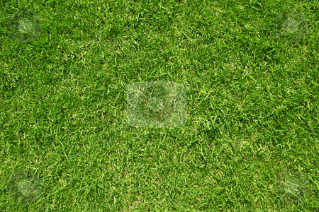 Green grass close-up stock photo, Green grass close-up. Can be used as background by Sean Nel
