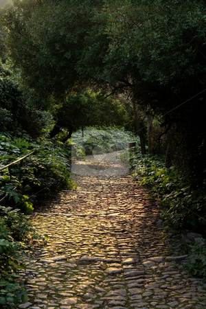 Beautiful park with trees in France stock photo, Beautiful park with green trees, plants and cobblestone walkway in France by Sean Nel