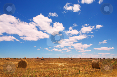 Golden bales of hay on the lands stock photo, Rolls of golden gathered hay on the lands with a blues sky and puffy white clouds as a copy space area. Shot in late afternoon sun just before sunset by Sean Nel