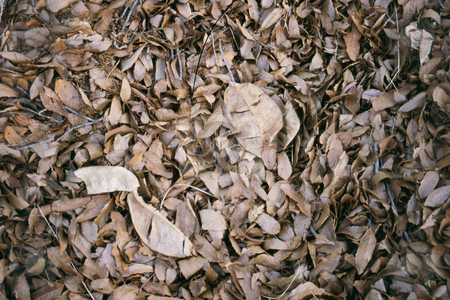 Winetr leaves stock photo, Dead leaves by Sean Nel