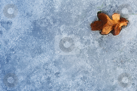 Regensburg #54 stock photo, A brown leaf, on ice. by Sean Nel
