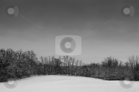 Snow Landscape #2 stock photo, Leafless trees on a snowy landscape in Germany by Sean Nel
