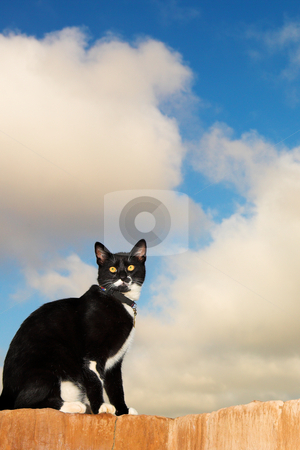 Cat #4 stock photo, A black and white cat sitting on a wall. by Sean Nel