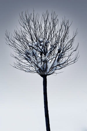 Straubing #27 stock photo, Single tree with snow on the branches - Black and White by Sean Nel