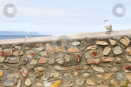 Bird #10 stock photo, Seagull sitting on stone wall - copy space by Sean Nel