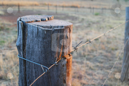 Barbed wire fence stock photo, Old barbed wire fence at sunset by Sean Nel
